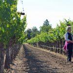 Corison Winery 8