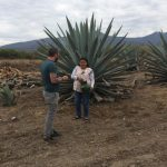 The Magical Mezcal Mystery Tour 3