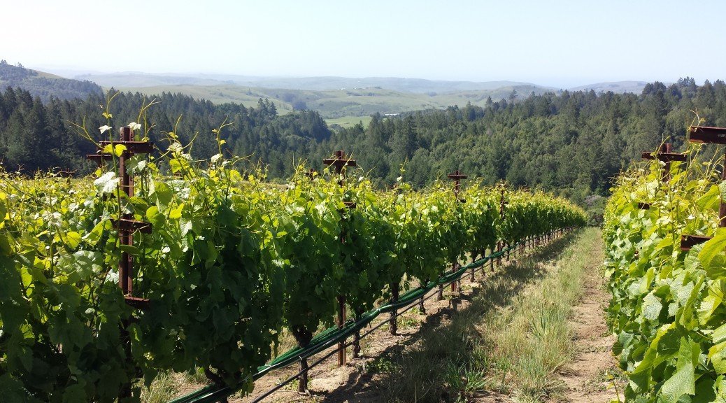 Occidental Wines: The Legacy of Steve Kistler 1
