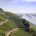 Introducing Georg Breuer: Classic Rheingau Rieslings 2
