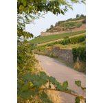 Introducing Georg Breuer: Classic Rheingau Rieslings 22