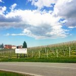 Three Days in the Langhe 19