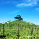 Three Days in the Langhe 14