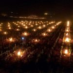Candles burning in Chassagne-Montrachet 'Les Mazures'