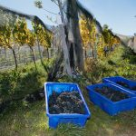 Burn Cottage: Excellence in Biodynamics & Pinot Noir 8