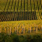 Burn Cottage: Excellence in Biodynamics & Pinot Noir 10
