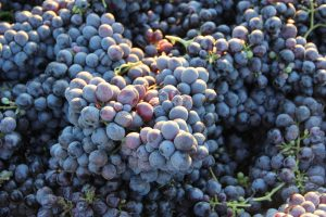 Zinfandel: American Heritage in a Glass 4