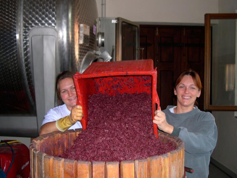 Cigliuti: Purity and Terroir in Barbaresco 1