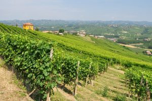 2013 Barolo: A Vintage to Remember 4