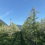 Two Days in the Alto Adige 22