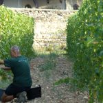Harvest 2016 at Le Clos