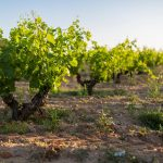 Finca Torremilanos: A Gem Hidden In Plain Sight 9
