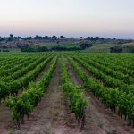 Finca Torremilanos: A Gem Hidden In Plain Sight 20