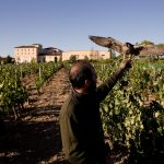 Finca Torremilanos: A Gem Hidden In Plain Sight 22