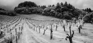 Introducing Mayacamas: 128 Years, Singular & Resilient 4