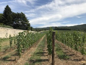 Tenuta Santa Maria di Gaetano Bertani: A Key Estate in Italian History, Culture, and Wine 2