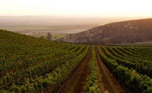 Where the Hills Meet the Sea: Tyler Winery's Exploration of Santa Barbara County 13