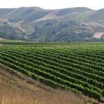 Where the Hills Meet the Sea: Tyler Winery's Exploration of Santa Barbara County 19