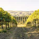 Where the Hills Meet the Sea: Tyler Winery's Exploration of Santa Barbara County 20