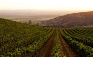 Where the Hills Meet the Sea: Tyler Winery's Exploration of Santa Barbara County 13