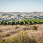 Where the Hills Meet the Sea: Tyler Winery's Exploration of Santa Barbara County 18