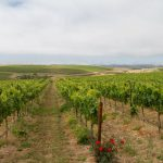 Where the Hills Meet the Sea: Tyler Winery's Exploration of Santa Barbara County 21
