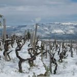 Terre Nere's 2016 Releases: Mountain Majesty 2