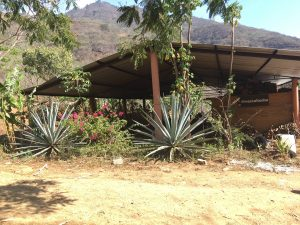 RESPECT TO THE MAESTROS: Agave, Community and Socioeconomics in Mezcal 4