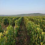 Les Chétillons | Champagne JL Vergnon
