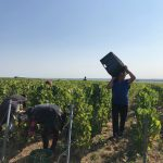 Champagne JL Vergnon | Le Mesnil-sur-Oger