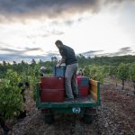 La Bernarde | Côtes de Provence