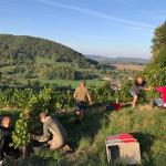 Domaine Rolet | Jura