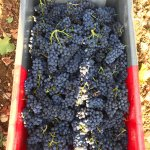 Pinot Noir from Clerget | Volnay