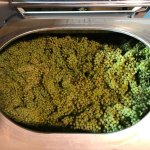 Chardonnay in the press at Rolet