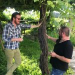 The Lost World: Pre-Phylloxera Albariño in the Val do Salnés 4