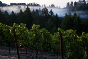 A Return to Classic: The Stylistic Evolution of California Wine 10