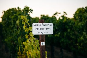 A Return to Classic: The Stylistic Evolution of California Wine 3