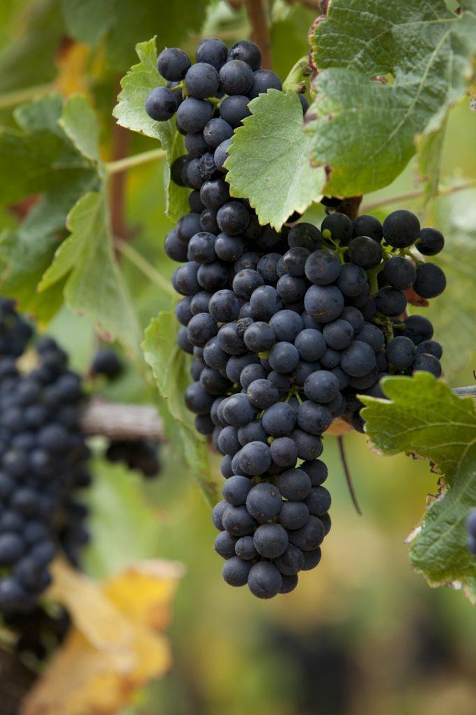 Zinfandel: American Heritage in a Glass - Skurnik Wines