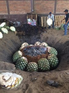 AGAVE EXPLOSION! 9