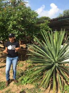 AGAVE EXPLOSION! 2