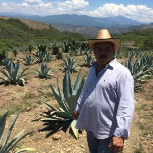 AGAVE EXPLOSION! 3