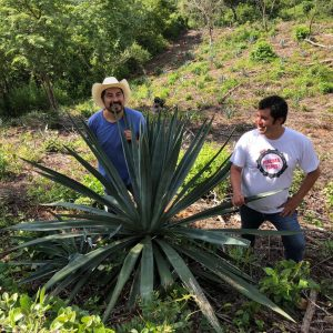 AGAVE EXPLOSION! 5