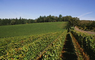 North Valley by Soter Vineyards