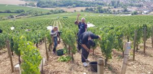 2019 Harvest Notes from Our friends in France 1