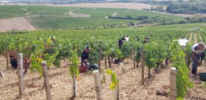 2019 Harvest Notes from Our friends in France 2