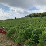 The 2019 Harvest Report in France -- Part II! 10