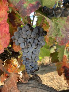 Sardinia's Best Kept Secret - The Vermentino of Surrau 5
