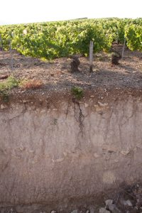 The 2018 Vintage in Chablis 1