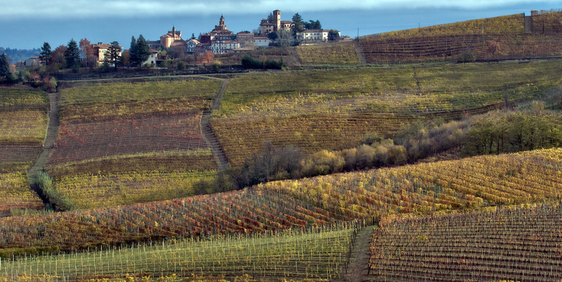 Tour the Vineyards with Andrea Sottimano 1