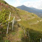 Ar.Pe.Pe: The New Dawn of Nebbiolo from Valtellina 13